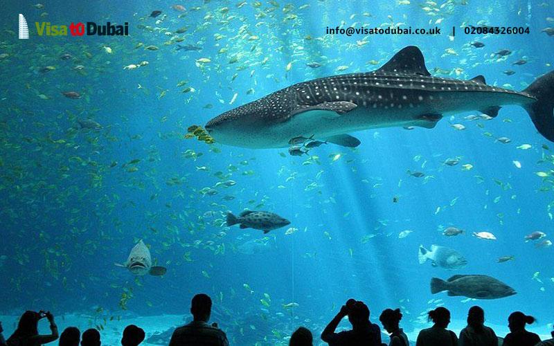 National Aquarium Abu Dhabi